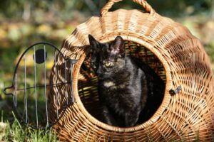 Eine Katze Transportbox aus Holz oder Korbgeflecht: Gemütliche Fahrt für den Stubentiger (#3)