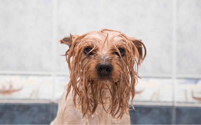 Nasse Hunde sollten wirklich richtig gut abgetrocknet werden, um Hundegerüchen vorzubeugen. (#1)