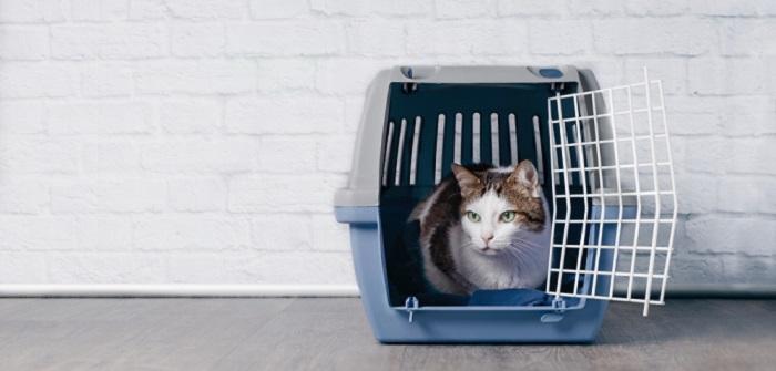 Katzentransportbox Die Richtige Transportbox Für Die Katze