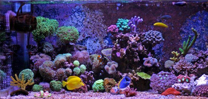 Meerwasseraquarium: 10 Tipps rund ums Meerwasseraquarium