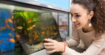 Mulm im Aquarium – absaugen oder nicht?