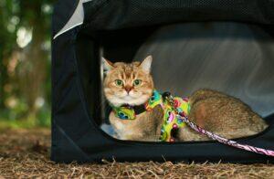 Unsichere Variante der Katze Transportbox mit textilen Wänden: Zu leicht kann die Box kippen, außerdem bietet sie dem Tier keinerlei Halt (#4)