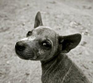 """Welches Haustier passt zu mir? Beim Hund stellt sich sogar noch die Frage """"Welche Hunderasse passt zu mir?"""". Keine leichte Entscheidung und man sollte sich hierfür ausreichend Zeit für Überlegungen lassen. (#1)"""