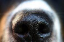 Hundegerüche entfernen: Diese 7 Tipps helfen wirklich