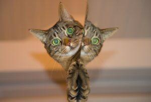 Die Katze ist eher eigensinnig. Stets schmusebereit, jedoch wenig hörig. (#5)