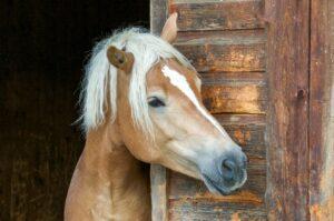 Wie alt wird ein Pferd? (#2)