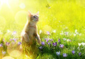 Wie alt wird eine Katze? (#4)