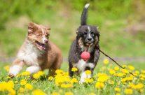 Abwechslung für den besten Freund des Menschen: 5 Spielzeuge für den Hund