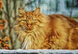 Lebenserwartung einer Hauskatze: Wie alt werden Katzen wirklich?
