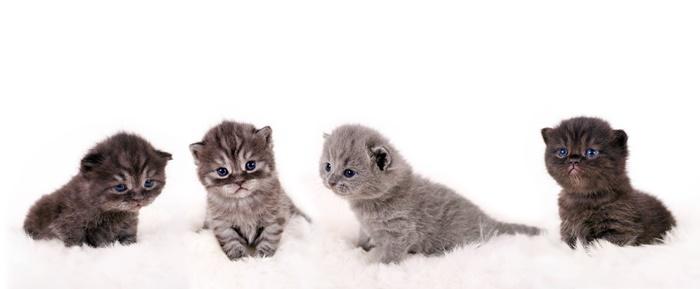 """Katzenkinder kaufen: Tipps für """"Ersttäter"""""""