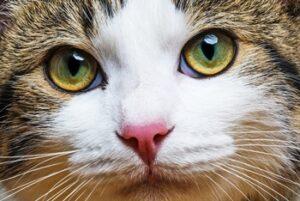 Katzenbabys: Rassekatzen oder Normalos (#2)