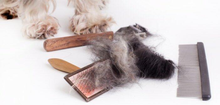 Hunde- und Katzenhaare: Was hilft wirklich gegen Katzen- und Hundehaare?