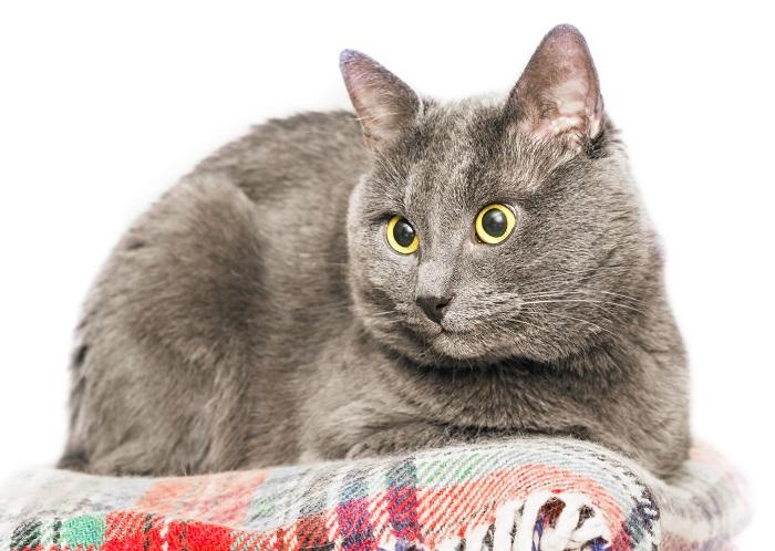 Katzenkinder kaufen. Aus jedem Katzenbaby wird irgendwann ein Katzensenior