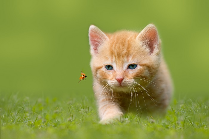 Katzenkinder kaufen, ob das der neue Mitbewohner wird ?