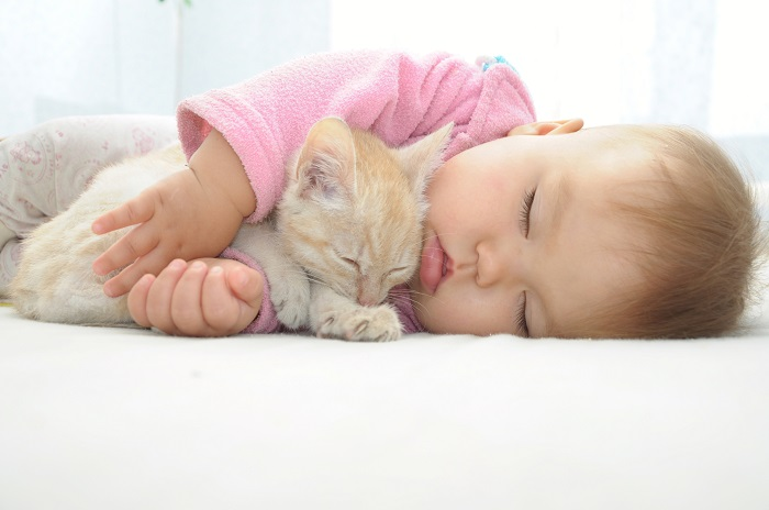 Katzenkinder kaufen für Ersttäter. Wenn man diese Bild sieht kann man doch garnicht anders