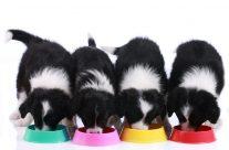 Wer kennt Reico Hundefutter?