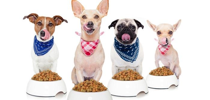Wer testet Hundefutter?