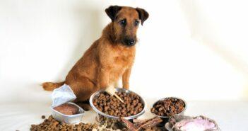 Wie Hundefutter umstellen?