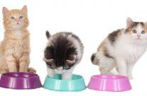 Was ist besser für Katzen: Nassfutter oder Trockenfutter