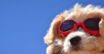 Sonnenbrillen für Hunde