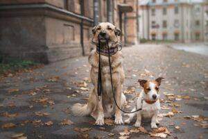 So gibt es Futter für Welpen, ausgewachsene Hunde Senioren sowie für kleine Hunderassen und große Hunderassen.