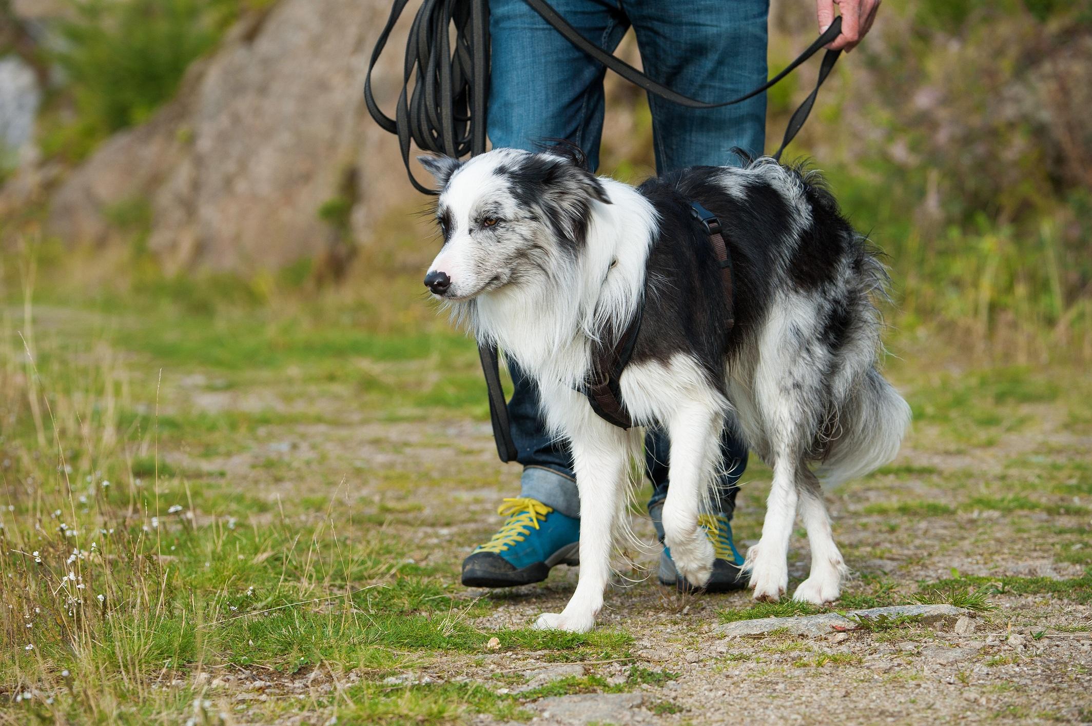aufmerksamkeit hund fördern