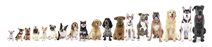 Hundesteuer ist für jeden dieser Vierbeiner fällig