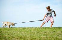 Leinenführigkeit trainieren – so funktioniert entspanntes Spazieren gehen auch mit Deinem Hund