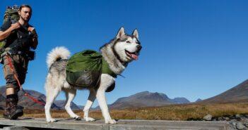 Leinenpflicht für Hunde: Leinenzwang für Hunde?