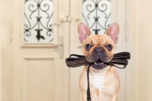 Leinenpflicht fuer Hunde