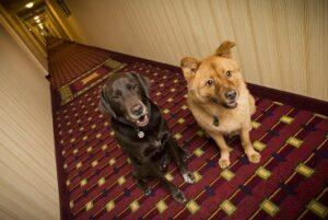 Jeder Hund hat Jagdtrieb in sich, bei dem einen ist es mehr ausgeprägt als bei dem anderen. (#04)