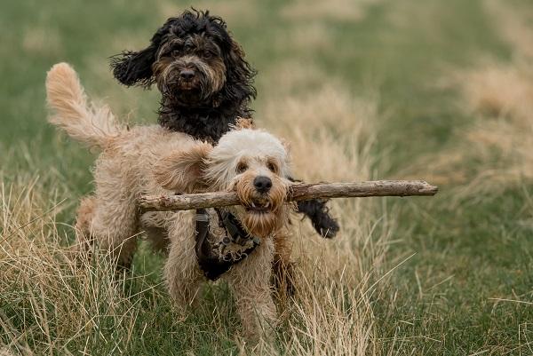 Reisen mit dem eigenen Hund sollte nur dann unternommen werden, wenn sich Ihr Haustier bester Gesundheit erfreut.