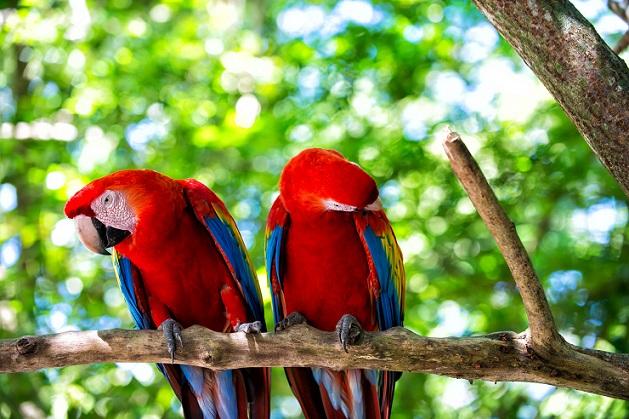Kaum vorstellbar, dass soo schöne Vögel Krankheiten wie Chlamydien übertragen können. (#01)