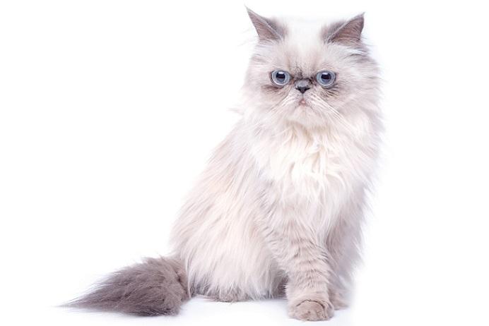Auch Katzen können die Chlamydien übertragen