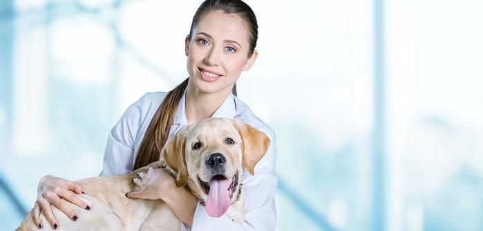 Hoffentlich kann meine Tierärztin meinen Hund von den Chlamydien befreien