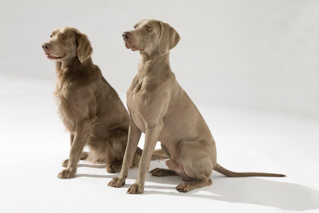 Sind die Beiden nicht wunderschön? Sie können schon einiges, was andere Junghunde noch lernen müssen