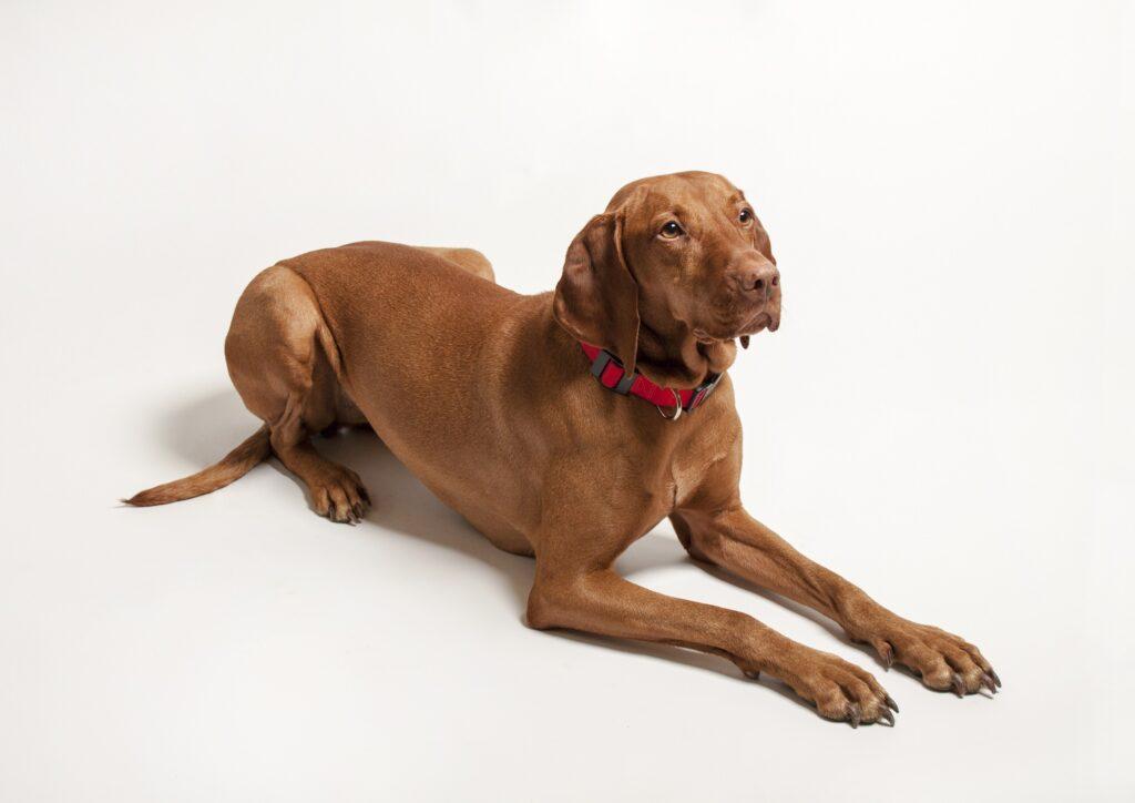 Ein ganz wichtiger Punkt: Rueckruftraining Niemals dem Hund nachlaufen