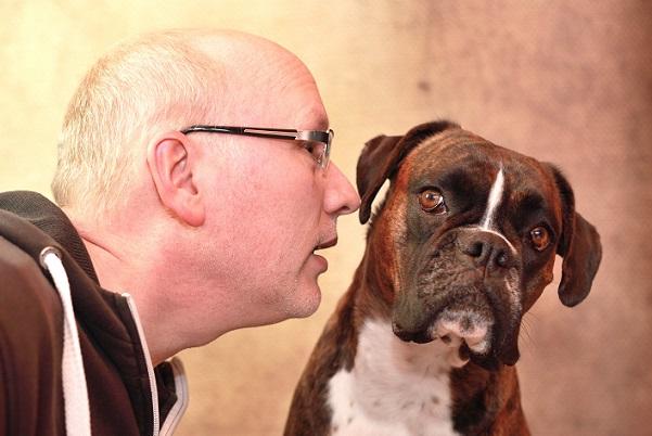 Dieses Herrchen geht sehr vertraut mit seinem Boxer um, auch er gehört zu Kategorie Familienhund.