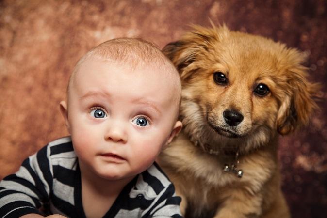 Kleine Kinder lieben Hunde: Damit nichts geschieht sollten die Eltern genau überlegen welcher Hund in die Familie darf.