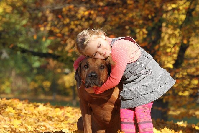 Australian Ridgeback: Was für ein toller Familienhund dieser große Kerl ist, zeigt dieses Bild.