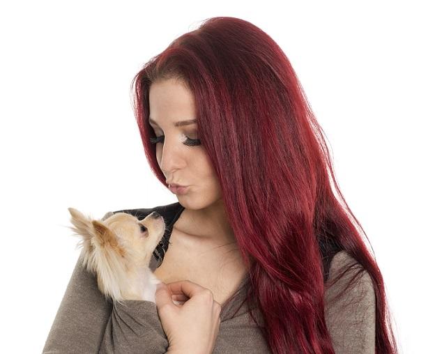 Dieser Hund wird einfach so als Schosshündchen deklariert. Das sind die HUnde , die man im Körbchen, im Täschchen mit sich trägt.