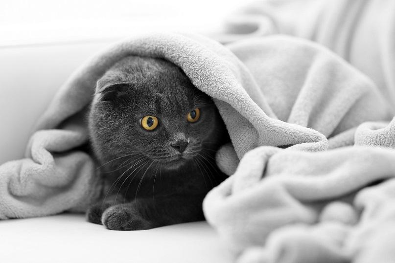 hund und katze so werden sie freunde fürs leben
