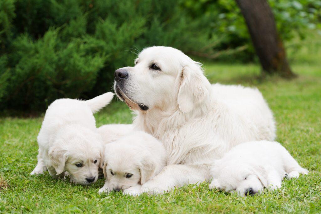 Hundemama mit Ihren Babys. So muss es eine kleine Weile sein, damit die Welpen gesund und glücklich sind