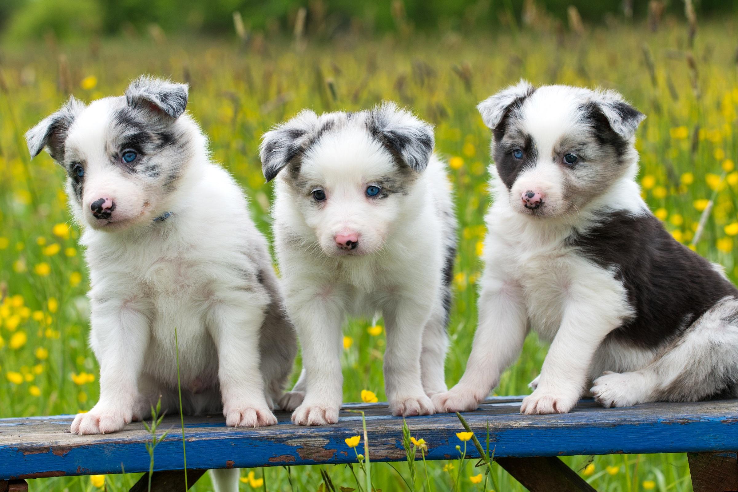 Hundebabys 220 Ber Das Gesch 228 Ft Mit Den S 252 223 En Kleinen Hundewelpen