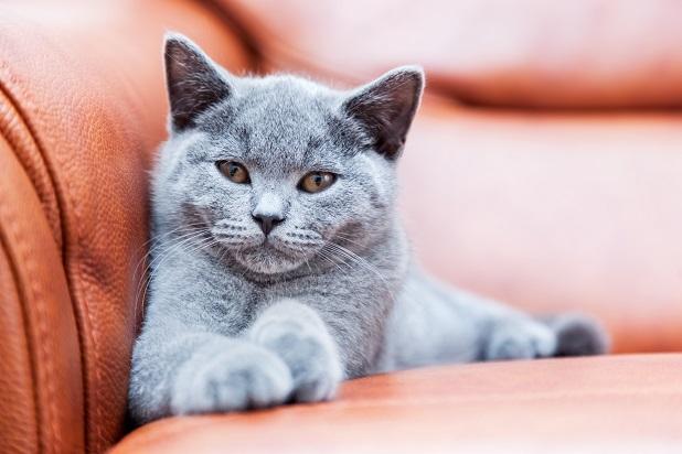 Menschen sind entweder Katzen- oder Hundefreunde.