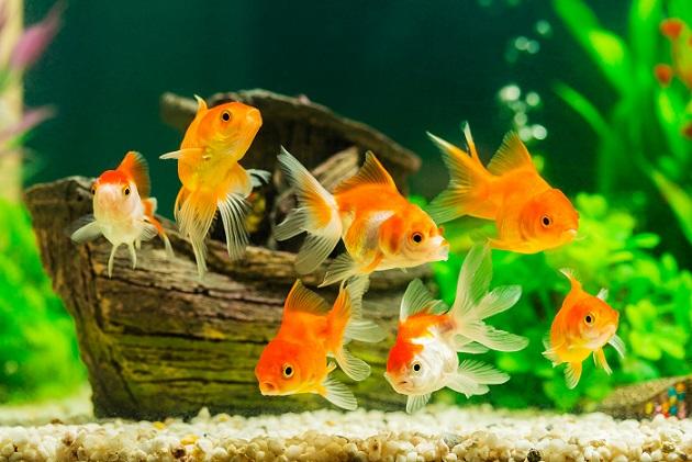 Fische sind wohl die pflegeleichtesten Haustiere