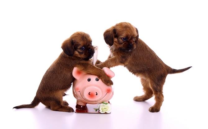 Auch der finanzielle Aspekt sollte vor der Anschaffung eines Haustieres berücksichtigt werden.
