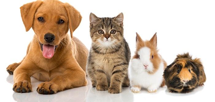 Haustiere: Welches Haustier passt zu mir?