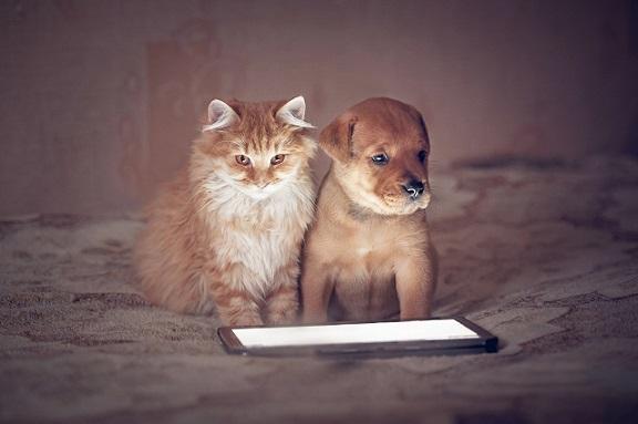 Hund und Katze: Die Beiden sehen sich nicht nur sehr ähnlich sie vertragen sich auch noch prima.