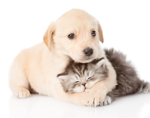 Hund und Katze umarmen sich. Sie sind so süß miteinander.(#04)
